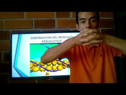 FISIOLOGIA IV- Placa motora- contracción muscular.