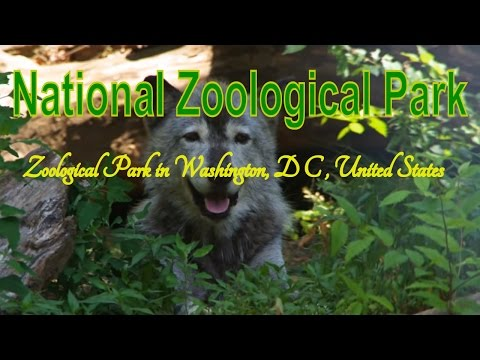 Visiting National Zoological Park, Zoological Park in Washington, D C , United States