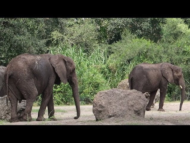 A Fun Day At Disney's Animal Kingdom! | Best Safari Ride, Animation Experience & Navi River Journey!