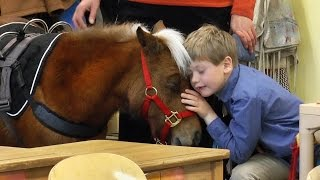 Miniature service horse makes her first visit to Winterberry Charter School