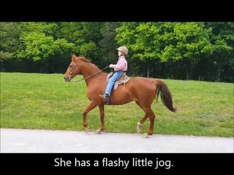 "SOLD ""Lady"" 10 yr 14.3 Sorrel Quarter Horse / Saddle Cross Mare - Trail Pleasure"
