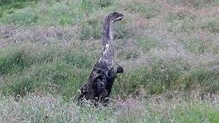 असली डायनासोर का फोटो? क्या डायनासोर अभी भी जीवित हैं? नासा के वैज्ञानिक ने भी माना Ica Stones को