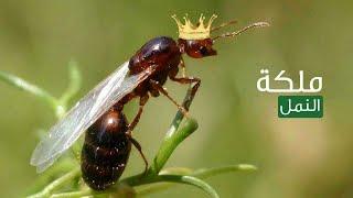 مملكة النمل د. مصطفي محمود من أروع حلقات برنامج العلم والايمان Mustafa Mahmoud - Kingdom of Ants