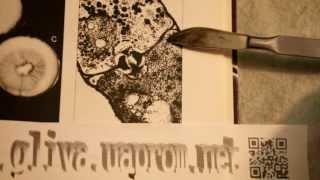 мицелий вешенки, с чего начать производство, урок 1 от funnymushroomschool