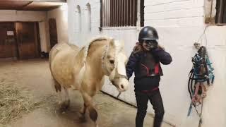 Уроки верховой езды. Занятия  верховой  ездой  в  КФХ Станица. Конкур.