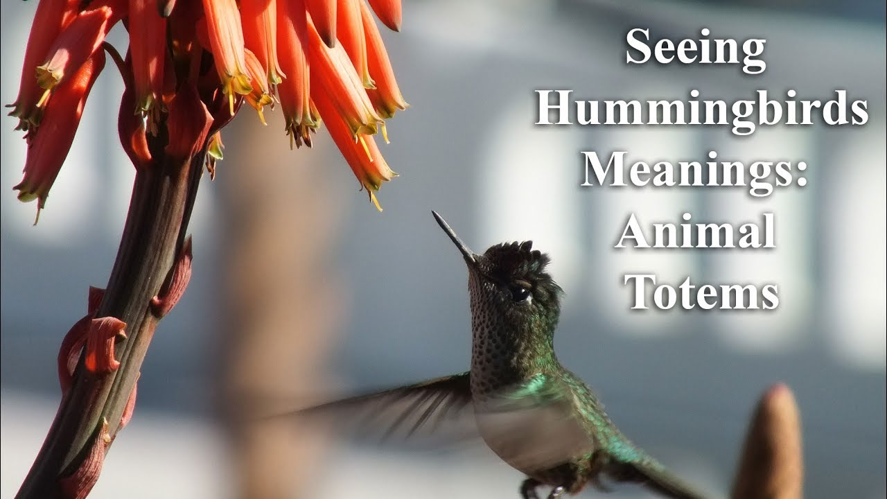 The Meaning Of Seeing Hummingbirds Animal Totems Youtube