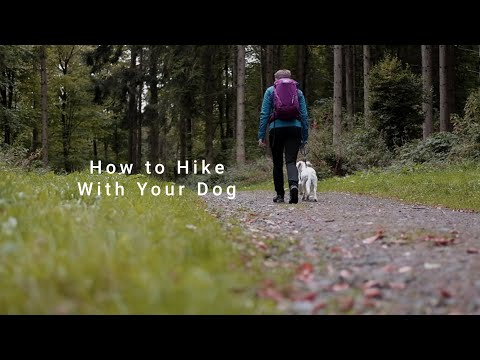 How to Safely Hike With Your Dog