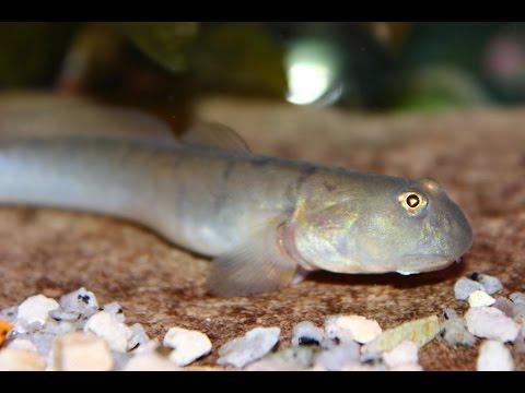 COOL AQUARIUM FISH | STRANGE AND WEIRD FISH