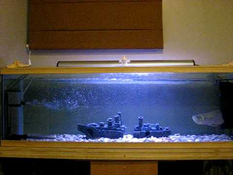 My 3 tanks tank 3 the arowana tank youtube for Arowana tank decoration