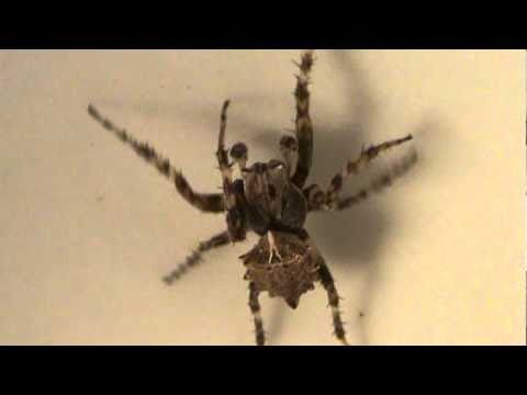 Strange Spider-Awesome Spider