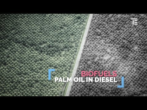 How can biofuels be bad for the planet?