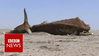 Hunger in Ethiopia after drought - BBC News