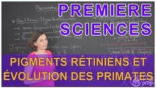 Pigments rétiniens et évolution des primates - Sciences 1ère ES/L - Les Bons Profs