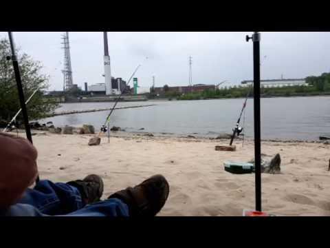 angeln am rhein youtube