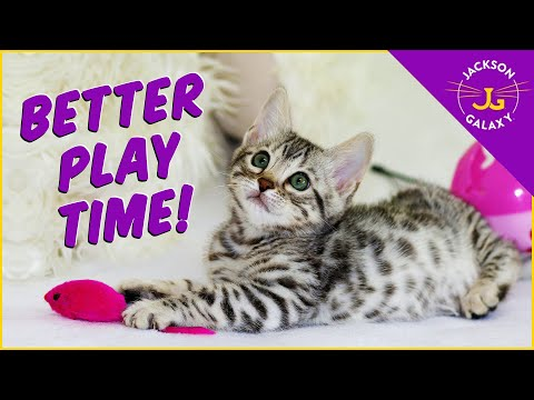 The Natural Way To Play with your Cat: Prey = Play.