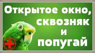 Опасно или необходимо проветривание комнаты для попугая?! Сквозняк, бактерии и другие страшилки.