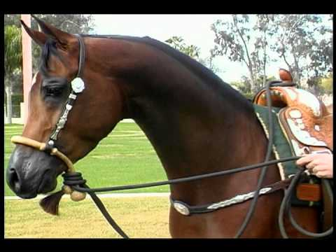 Beauty & Conformation of the Arabian Horse.mp4