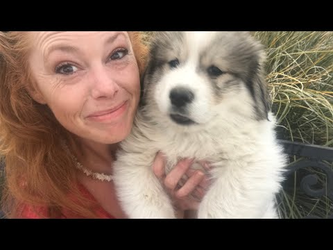 New Livestock Guardian Dogs and Update
