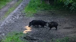 Popular Videos - Bilogora & Animals