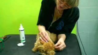 Стрижка кота..How to groom a cat?(, 2011-01-21T18:32:28.000Z)