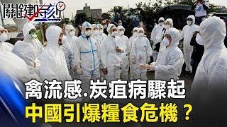 中國豬瘟延燒不停…禽流感、炭疽病驟起!中國引爆糧食危機? 關鍵時刻20181218-3 黃世聰