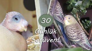 Muhabbet Kuşlarının İlk 30 Günü! | First 30 Days of Budgies!