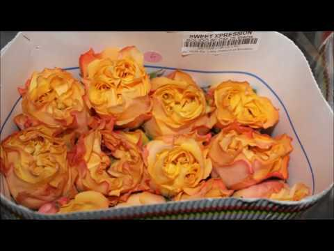 цветы в Ереване Ajania Flowers Salon