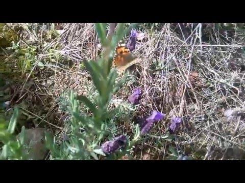 Aventuras con los Kratt - Zumbido y Rastreo de Insectos de YouTube · Alta definición · Duración:  9 minutos 2 segundos  · Más de 115.000 vistas · cargado el 23.11.2016 · cargado por Aventuras con los Kratt