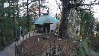 木幡山隠津島神社-門神社と木幡の大杉