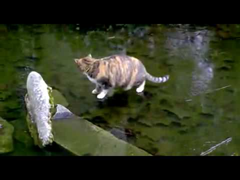 cat wants to catch fish on ice