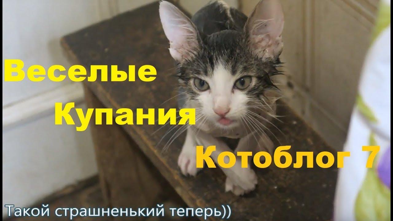 как правильно купать котенка с шампунем
