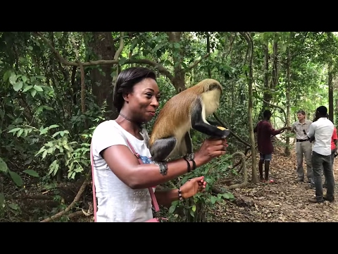 GHANA VLOG #20 || CLIMBING HIGHEST MOUNTAIN IN WEST AFRICA, AFADJATO || MONKEY SANCTUARY || ADEDE