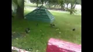 Сумасшедшие птички Mp4