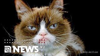 Умерла известная на весь мир Сердитая кошка
