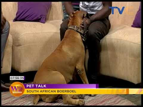 Pet Talk: South African Boerboel | Wake Up Nigeria