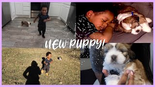 WE GOT A PUPPY FOR MY SON!  (Xureila's Life)