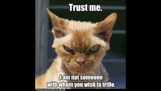funny & dangerous cat قطط مضحكة و خطيرة