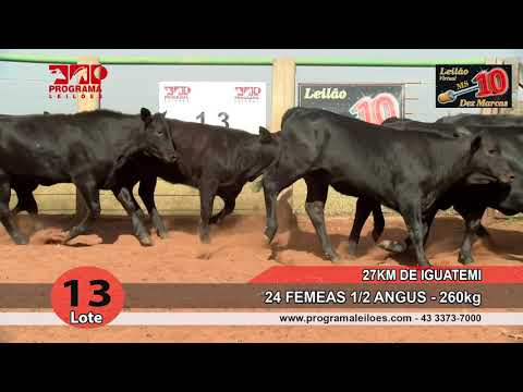 Lote 13