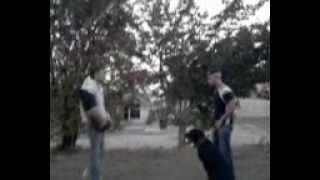 Alpha Dog Training Cyprus