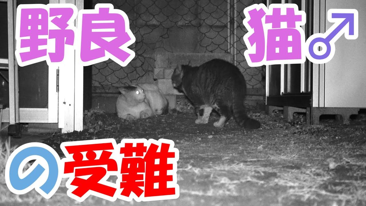 野良猫♀編 野良猫♂の受難【猫】かわいい・おもしろい