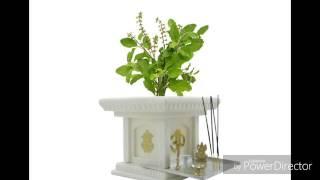 ఈ మొక్కలు ఇంట్లో ఉంటె అదృష్టం . THIS PLANTS GOOD FOR HOME IN TELUGU