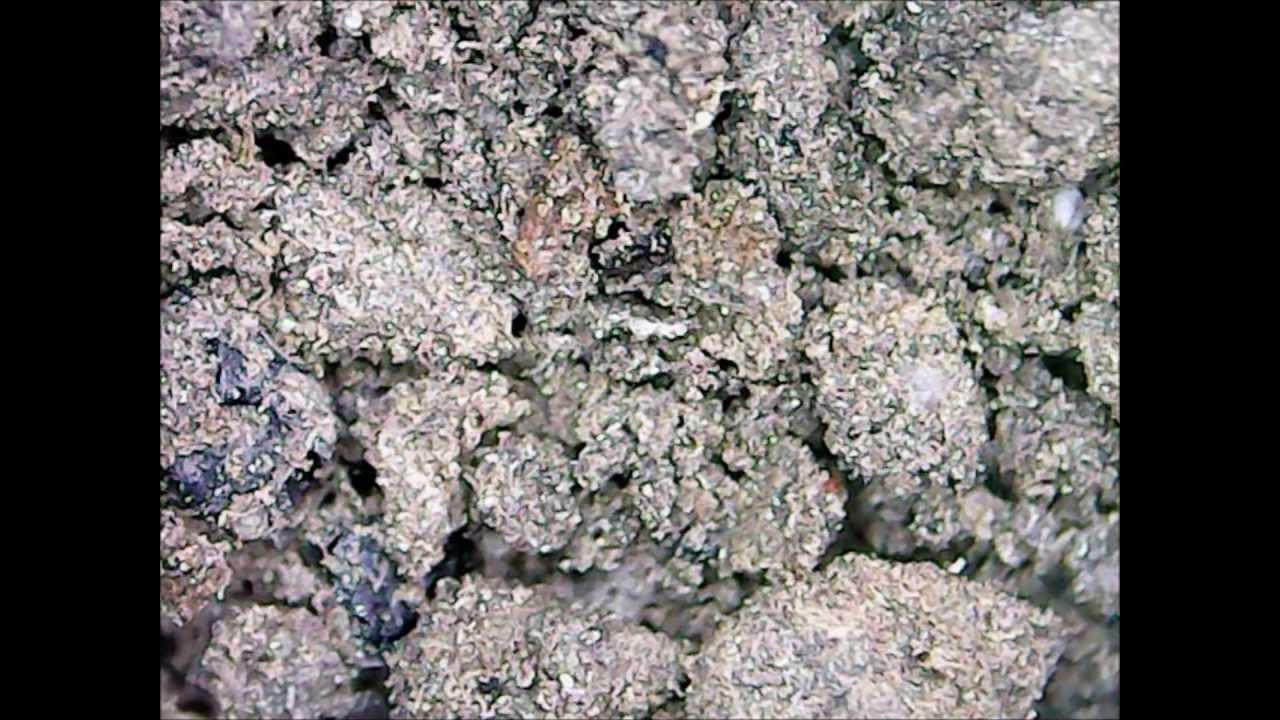flower pot soil under a microscope weird youtube