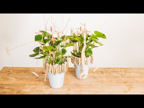 Elegant & Natural Anthurium Design | Flower Factor How To | Plant Creation