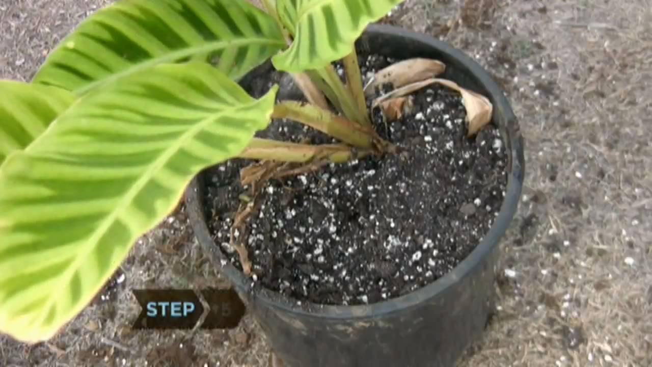 How to Revive a Dying Plant