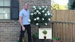 Cottage Farms Double Blooming Gardenia Patio Tree with Dan Wheeler