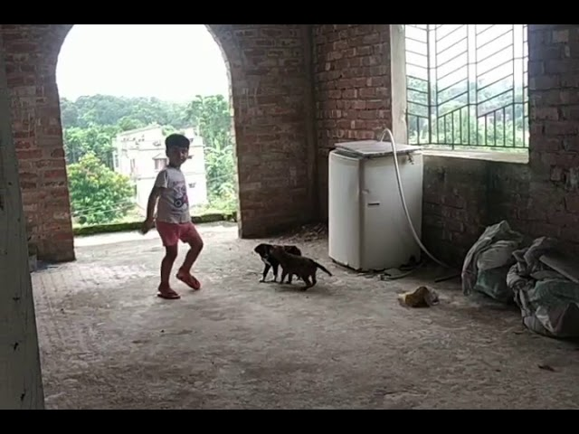 Human child with Indian puppies! Highly unsafe???