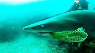 Så at haien slet. Da gjorde dykkerne det risikable valget