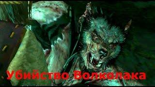 Witcher 3 Дикая охота -- Как убить Волколака Дикое сердце