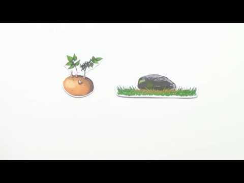 licht als abiotischer faktor anpassung der pflanzen basiswissen biologie kologie youtube. Black Bedroom Furniture Sets. Home Design Ideas