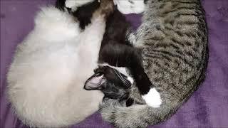 Уют - это спящие, мурчащие коты.